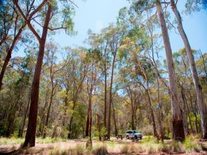 Coolah Tops National Park Camping - VIC Tourism