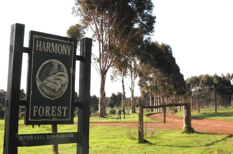 Harmony Forest
