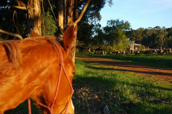 Billa Billa Farm Cottages - VIC Tourism