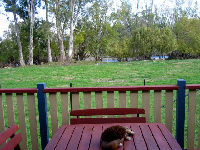 Ribbonwood Cottages - VIC Tourism