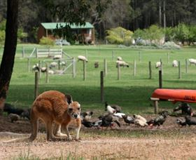 Diamond Forest Cottages and Farm Stay - VIC Tourism