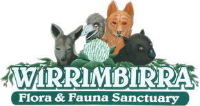 Wirrimbirra Sanctuary - VIC Tourism