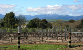 Buller View Wines - VIC Tourism