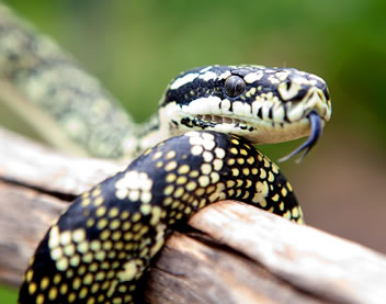 Reptile Encounters - VIC Tourism
