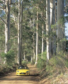 Mount Shadforth Scenic Drive - VIC Tourism