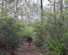 Margaret River Rails Trail - VIC Tourism