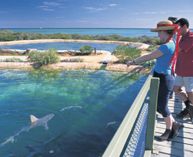 Shark Bay Marine Park - VIC Tourism