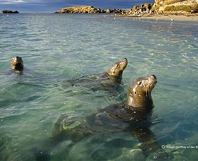 Shoalwater Islands Marine Park - VIC Tourism