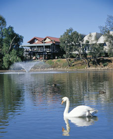 White Swans - VIC Tourism