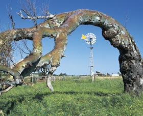 Greenough Leaning Trees - VIC Tourism