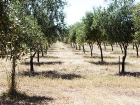 Talinga Grove Olive Oils - VIC Tourism