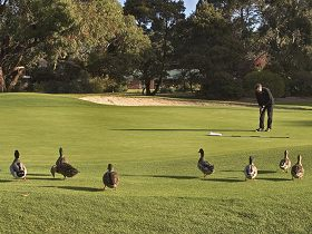Royal Hobart Golf Club - VIC Tourism