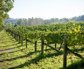 Surveyor's Hill Vineyards - VIC Tourism