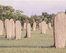 Magnetic Termite Mounds - VIC Tourism