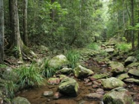 Amamoor State Forest - VIC Tourism