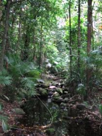 Mossman Gorge Rainforest Circuit Track Daintree National Park - VIC Tourism
