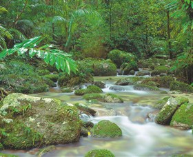 Mossman Gorge Daintree National Park - VIC Tourism