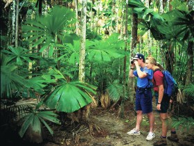 Mount Sorrow Ridge Trail Daintree National Park - VIC Tourism