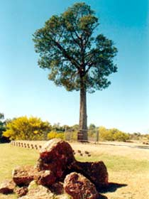 Robbers Tree - VIC Tourism