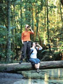 Birdwatching on the Fraser Coast - VIC Tourism