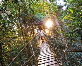 Tree Top Walkway - VIC Tourism