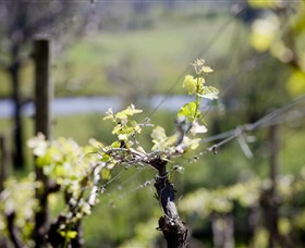 Norton Estate Wines - VIC Tourism