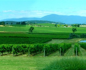 Acacia Ridge Vineyard - VIC Tourism