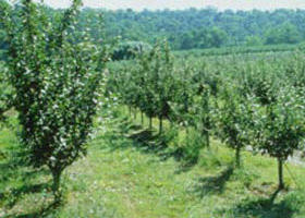 Pettys Orchard