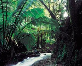 Melba Gully - VIC Tourism