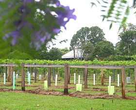 Douglas Vale Historic Homestead  Vineyard - VIC Tourism