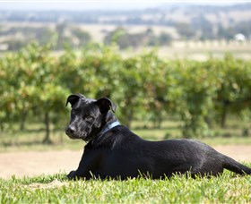Moothi Estate Vineyard and Cellar Door - VIC Tourism
