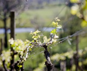 Whistling Eagle Vineyard - VIC Tourism