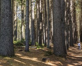 Sugarpine Walk - VIC Tourism