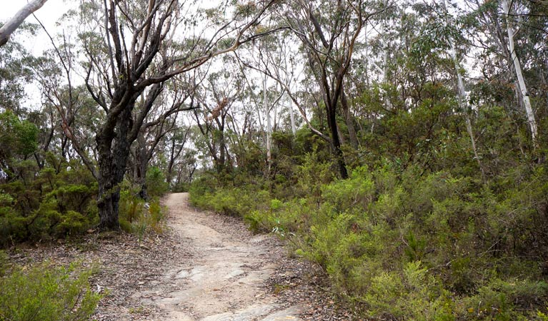 Six Foot walking track - VIC Tourism