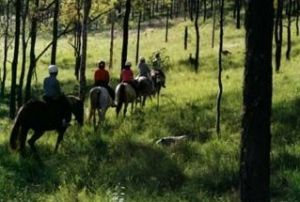 Hunter Valley Horse Riding and Adventures - VIC Tourism