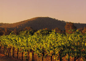Taltarni Vineyards - VIC Tourism