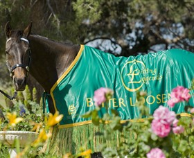 Living Legends The International Home of Rest for Champion Horses - VIC Tourism