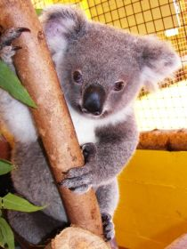 Cooberrie Park Wildlife Sanctuary - VIC Tourism