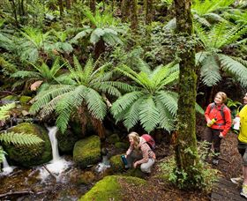 Baw Baw National Park - VIC Tourism