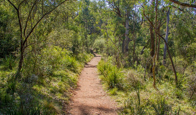 Mares Forest Creek walking track - VIC Tourism
