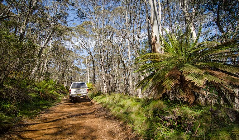 Barrington trail - VIC Tourism