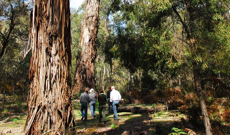 Tallaganda National Park - VIC Tourism