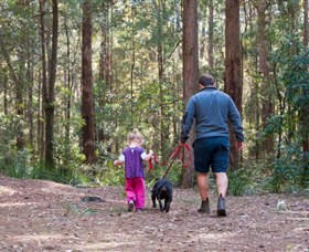 Olney State Forest - Watagan Mountains - VIC Tourism