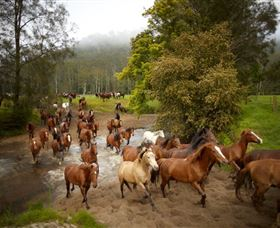 Glenworth Valley Horse Riding - VIC Tourism