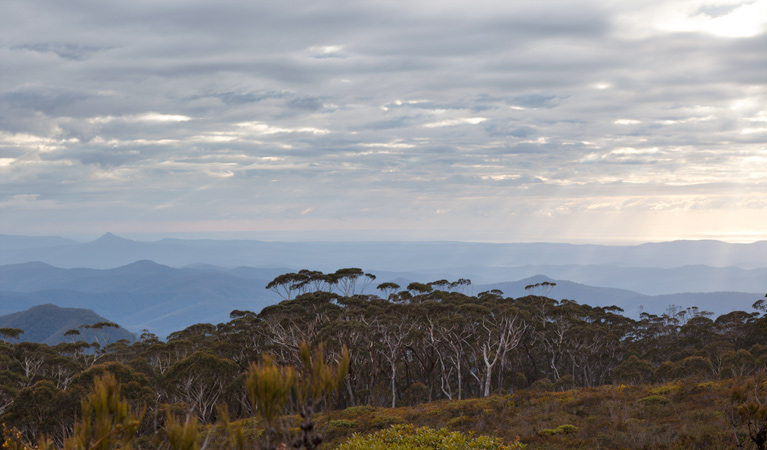 Mount Budawang trail - VIC Tourism