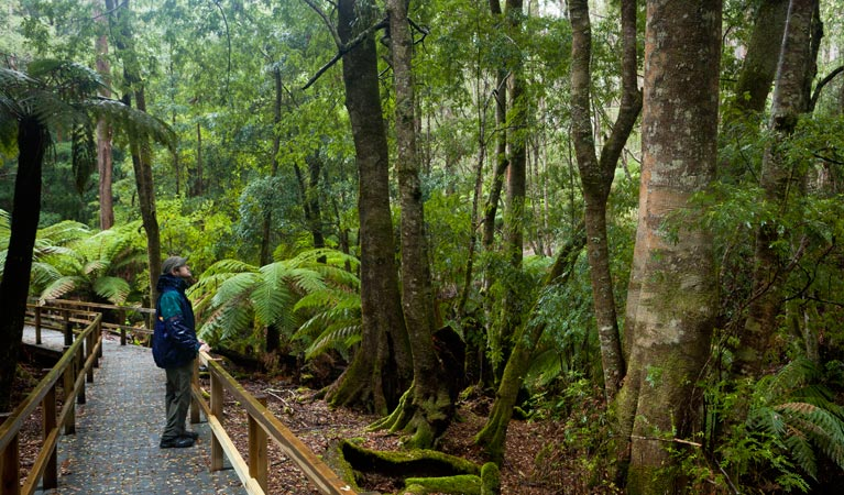 Monga National Park - VIC Tourism