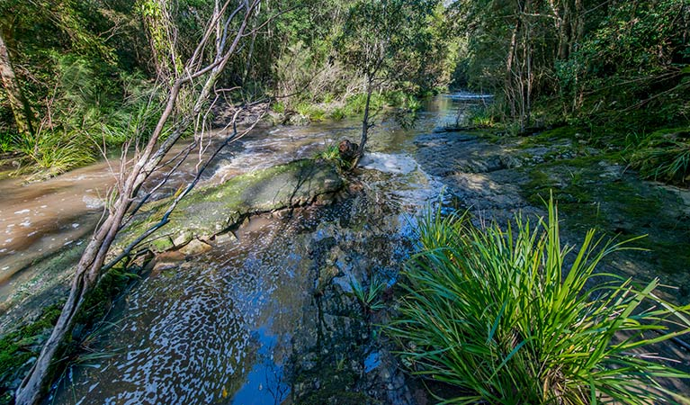 Dawson River walking track - VIC Tourism