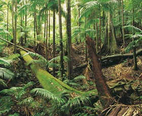 Wollumbin-Mount Warning National Park - VIC Tourism