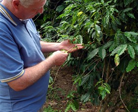 Wombah Coffee Plantation - VIC Tourism