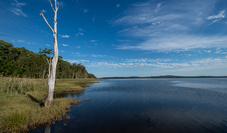 Lake Innes Nature Reserve - VIC Tourism